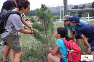Illanot Campers looking at Ponderosa pine tree